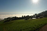 Nebel uberm Zurichsee