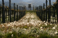 beschutzter Weingarten