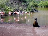 Galapagas - ein Paradies fur Tiere