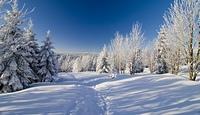 ...winterland...