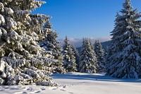 ....winterland....