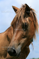 Horse Head - Yonaguni Island, Okinawa, Japan