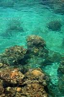 Coral Reef - Yonaguni Island, Okinawa, Japan