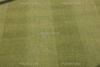 green grass from a sport stadium. could be used for football, soccer, baseball, etc.