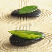 harmony concept with zen stones and leaves