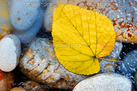 The yellow leaf on stones has frozen in ice in the autumn