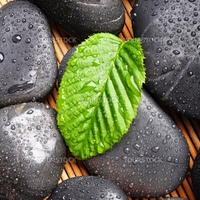 zen stone with green leaf or water drops showing spa or wellness concept
