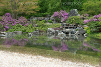Blooming Japanese garden with water cascades reflecting in pond.