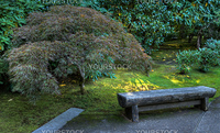 Japanese garden stone bench next to maple done as HDR image