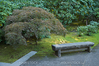 Japanese garden stone bench next to maple tree
