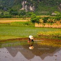 Rice Field Work in Yangshuo, Guangxi, China.