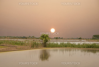 The dawn over a flooded rice field