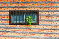 Vintage wall and windows with plants
