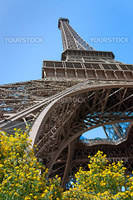 Perspective of the Eiffel tower with blossom and nice blue sky
