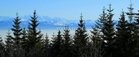 Panorama of the Alps mountains behind fi trees by beautiful winter day
