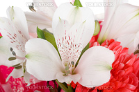 close-up wedding bouquet with orchid and chrysanthemum, isolated on white