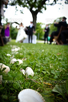 Outdoor wedding with shells as decoration.