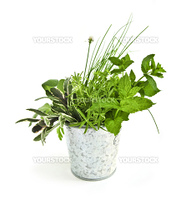 Fresh herbs in a bucket isolated on white background