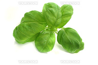 Basil on a white background - Still Life - Food