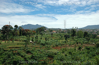 panoramic view of mountain hill with many plant and trees