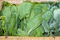 Organic Chinese Green Vegetable in Weaved Basket