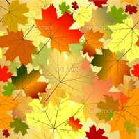 Floral seamless pattern of transparent  maple leaves  (vector EPS 10)