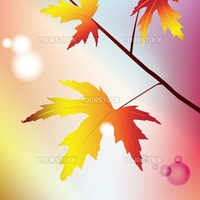 Illustration of a maple branch in sunny weather on a colored background with a nice bokeh