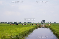 Dutch farm land with cattle cows and ditch