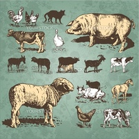 Set of farm animal antique engravings, scalable and editable vector illustration
