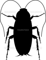 Illustration of a cockroach silhouette on white background