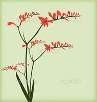 Beautiful freesia greeting card