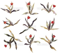 red tulip sketch vector set