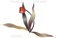 red tulip flower vector sketch