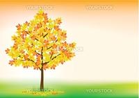Vector illustration of autumn maple