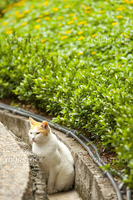 A cat in countryside waiting pray