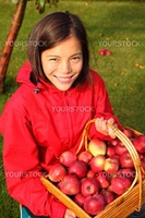 Apple picking in the fall - beautiful young woman with basket full of red apples.