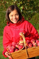 Apple picking in the fall - beautiful girl with basket full of red apples.