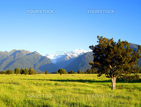 Tree and Field in front of Mount Cook and Mount Tasman, New Zealand