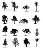 Set of trees. It is isolated on a white background