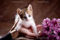 Little kitten among flowers on brown studio background