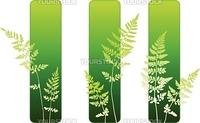 Fern plant green environmental bannersOriginal vector illustration