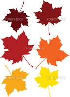 Vector illustration of a maple leaf is six different fall colors