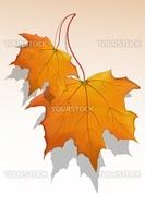 illustration of vector maple leaf