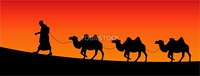 vector silhouette of camels