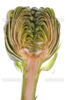 Isolated macro image of a sliced globe artichoke.