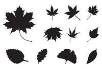 Set of Autumn leaf silhouettes, symbol, icon. Vector illustration isolated on white background.