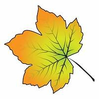 Image of cartoon maple leaf . Vector illustration isolated on white background.