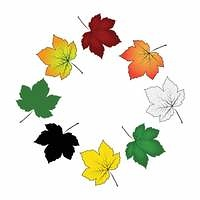 Set of colorful maple leaf . Vector illustration isolated on white background.