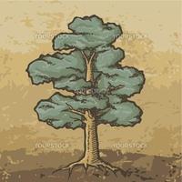 Oak tree sketch