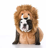 puppy wearing costume